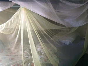 mosquito netted beds