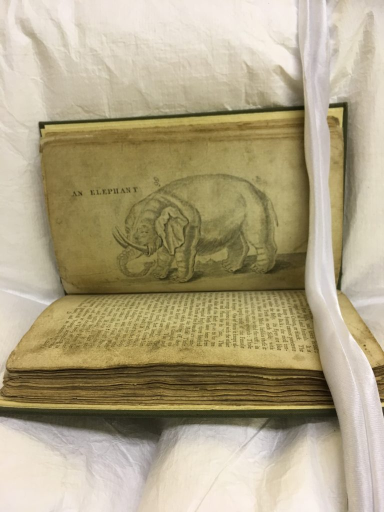 Illustrated animals (Elephant)